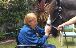 Clydesdale horse visits Yallambee