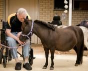 Pony Visits Dryandra